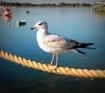 Village Bird