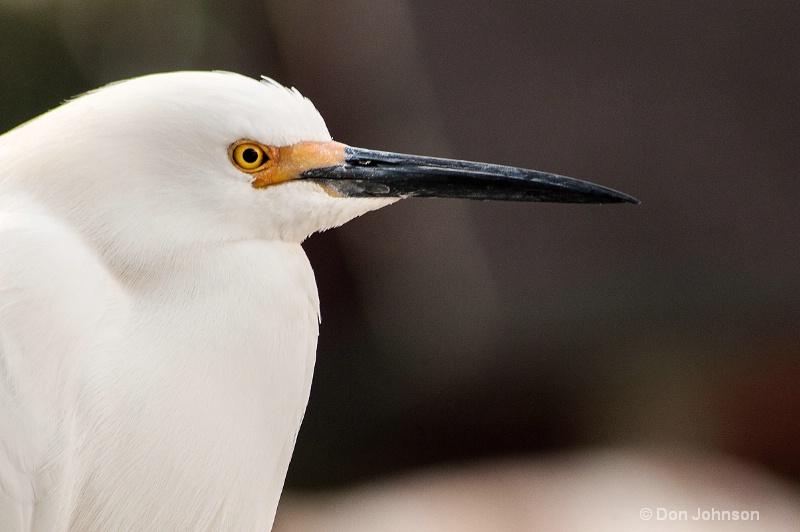 Egret in Florida - ID: 13787123 © Don Johnson