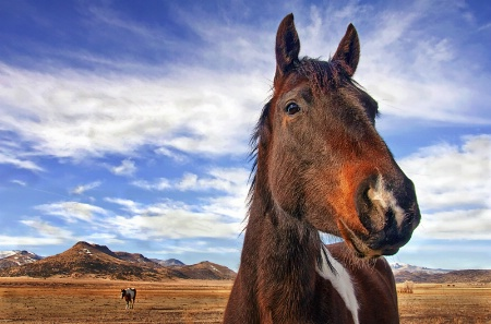 The Curious Horse