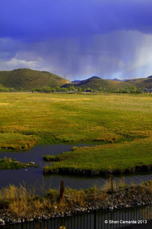 Spring Rain - ID: 13791507 © Sheri Camarda