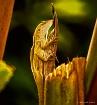 MT~Natural Camofl...
