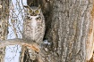 Owl surprise