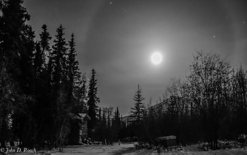 Moondog in Alaska - ID: 13799899 © John D. Roach