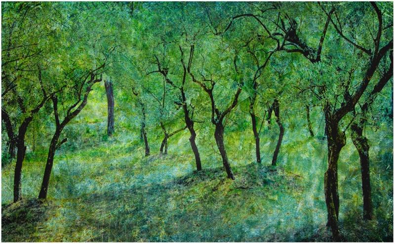 Olive grove at St. Paul Asylum
