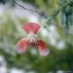 Cardinal Dive