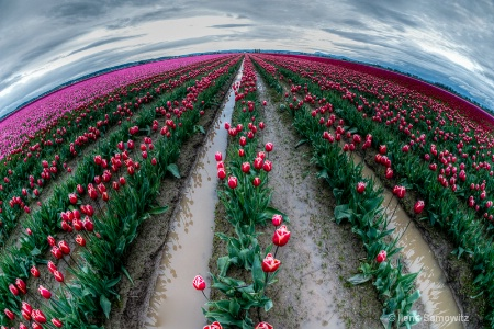 Tulip Planet