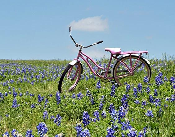 Bluebonnet Bike Ride