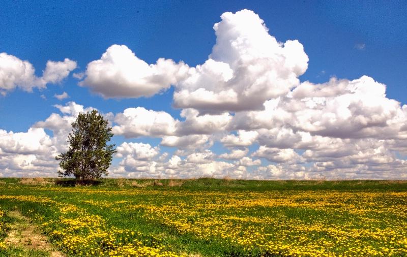 """""""Spring Day in Alberta, Canada"""""""