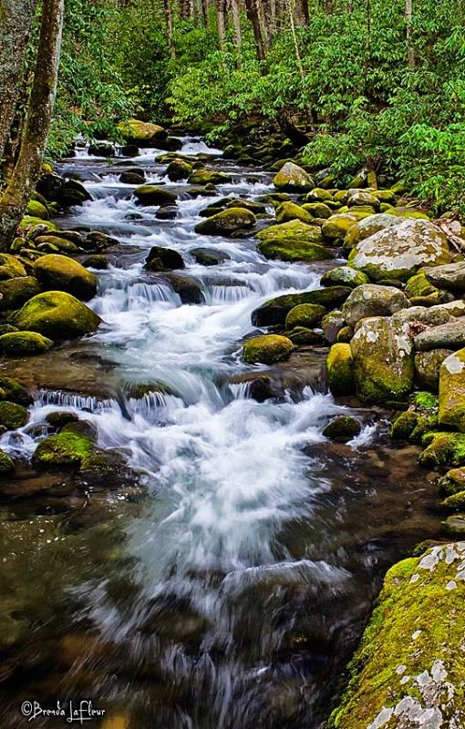 Smokey Mountain National Park - Roaring Fork Area