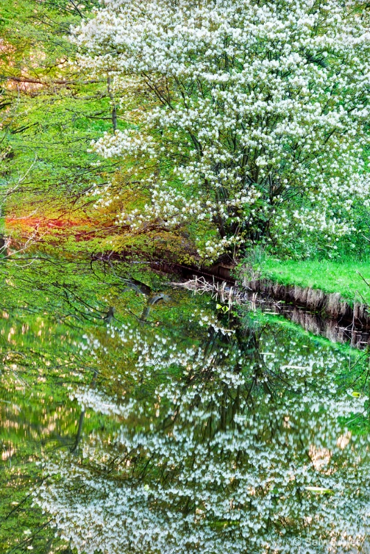 Spring Reflection