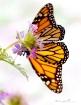 My butterfly flo...