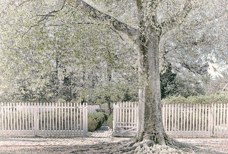 Williamsburg Tree - ID: 13855442 © Wanda Judd