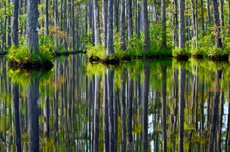 Reflections of Cypress Gardens