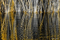 Gold on black water
