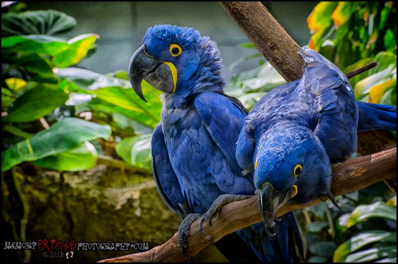 """""""Blue Beauty"""" - ID: 13871583 © Deborah L. Burgess"""