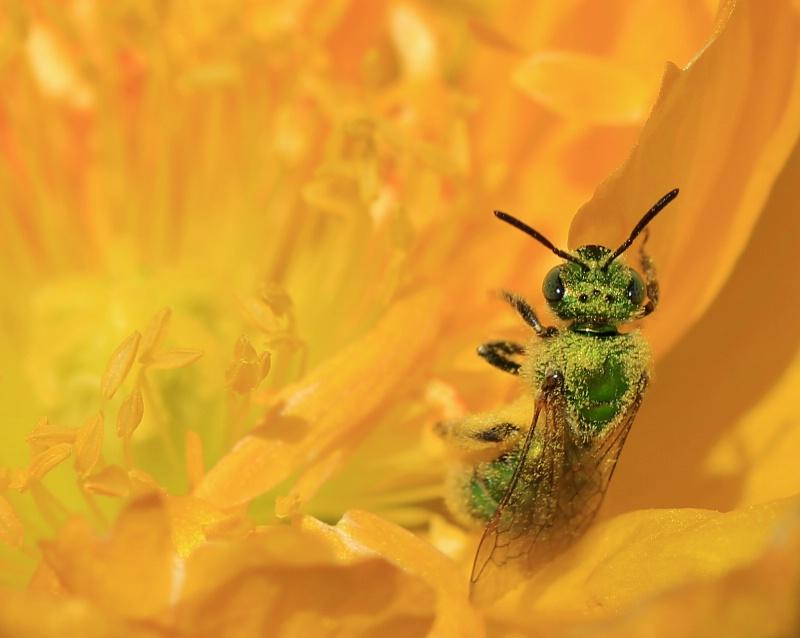 Haulin' Pollen