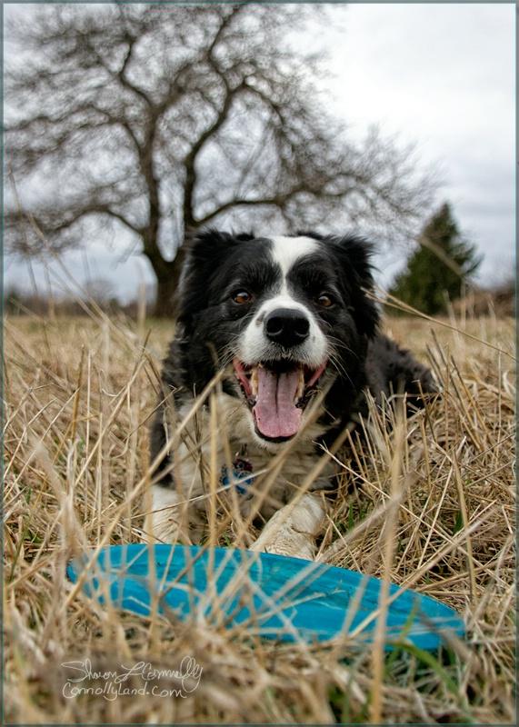 Finn Frisbee and Hay Field