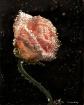 Rose Fizz 2