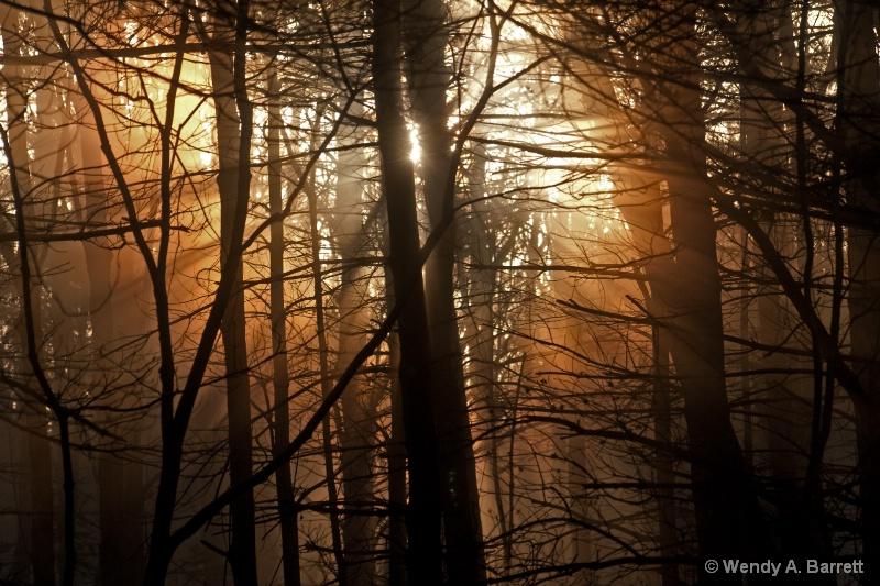 Light Rays - ID: 13901130 © Wendy A. Barrett