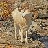 © Kenneth E. Bahr PhotoID # 13903306: Big Dall's Ram