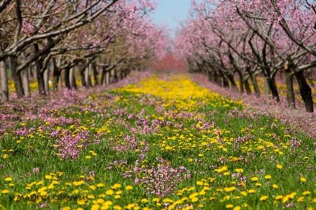 Blossom Heaven