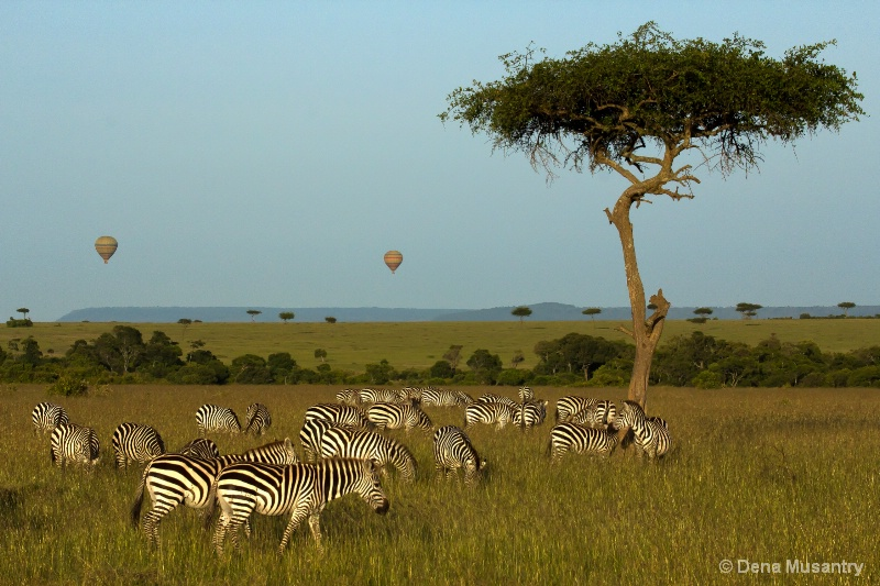 Morning on the Mara