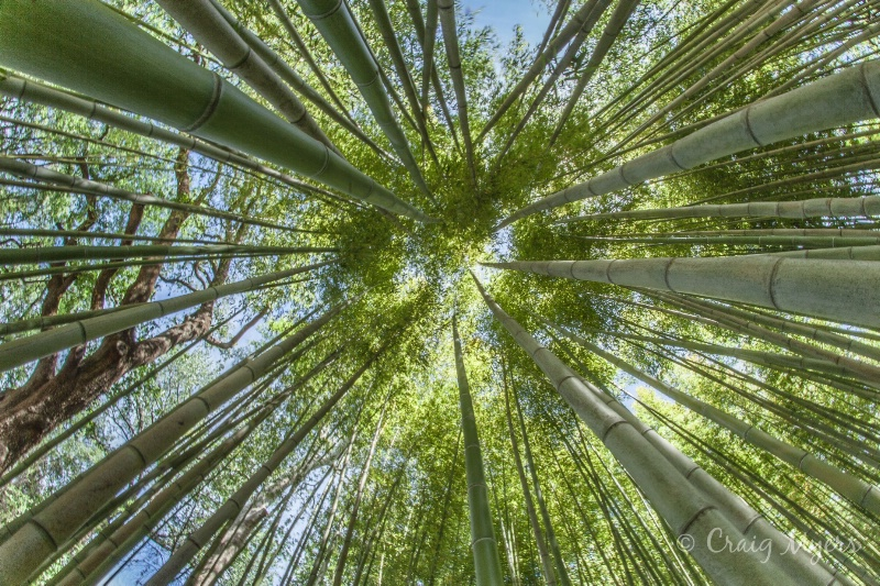 Bamboo Convergence