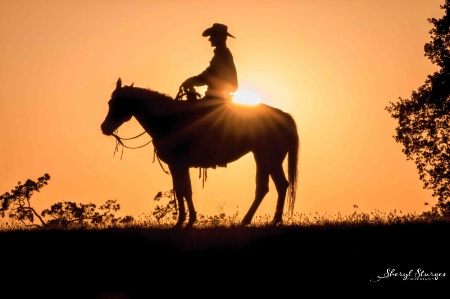 Cowboy Cassanova