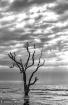 Botany Bay in Bla...