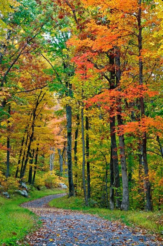 Strolling Along An Autumn Trail - ID: 13932142 © Zelia F. Frick