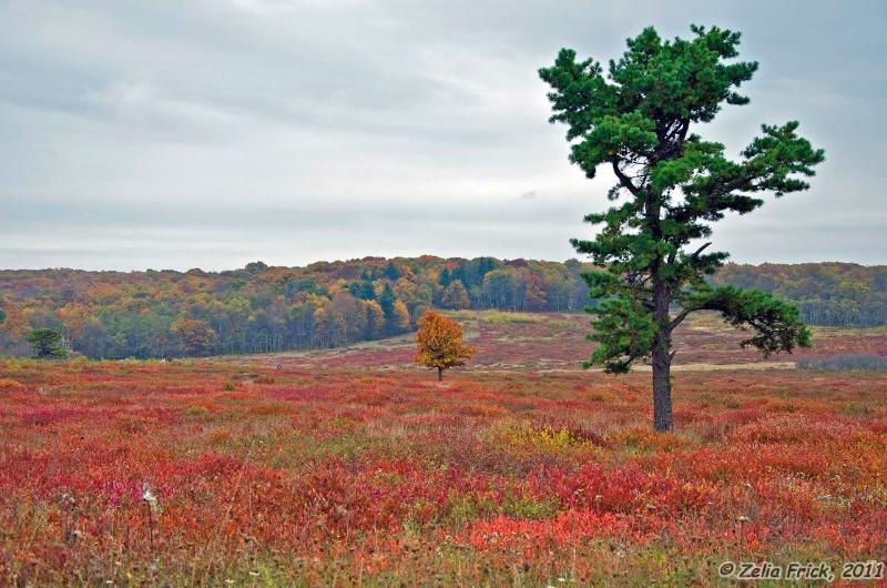Fields of Red - ID: 13932145 © Zelia F. Frick
