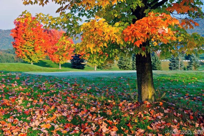 Falling Leaves - ID: 13932146 © Zelia F. Frick