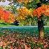 2Falling Leaves - ID: 13932146 © Zelia F. Frick