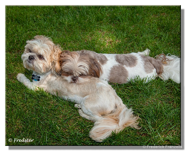 Scooter Sleeping On Ginger - ID: 13944915 © Frederick A. Franzella