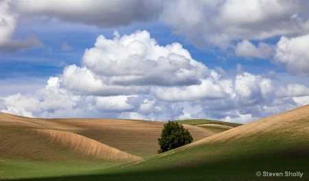 Lone Tree in the Palouse Hills_Final