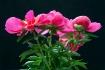 Colurful flower