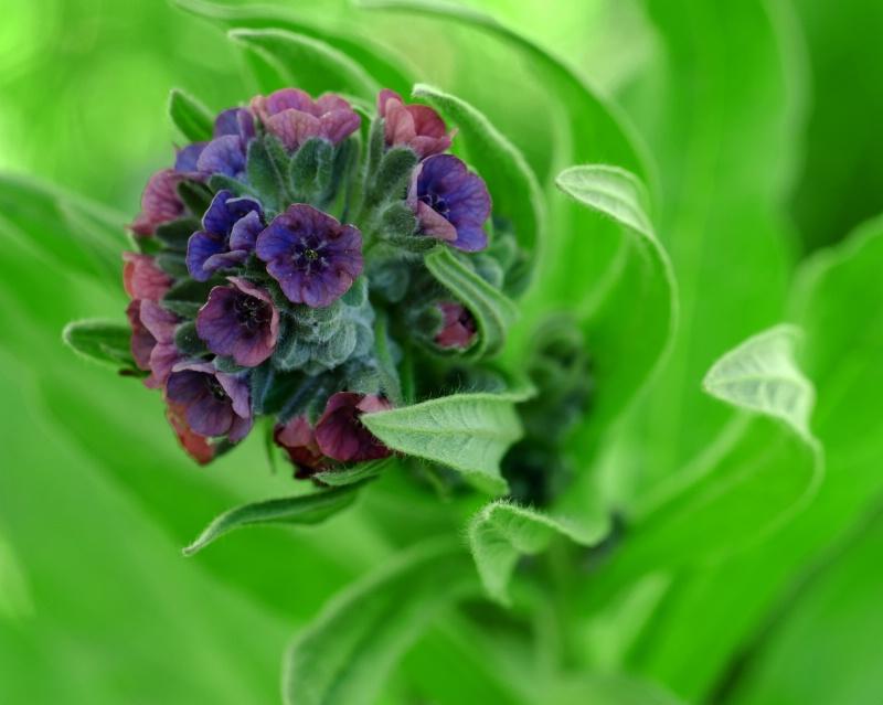 Utah Wildflower