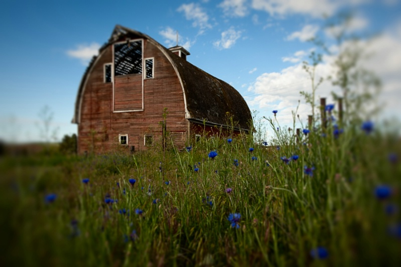Barn And Flowers