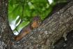 Squirrel up my tr...