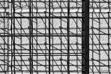 Trellis Lines