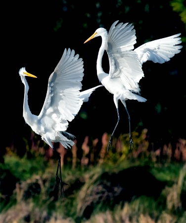 GWE Fight
