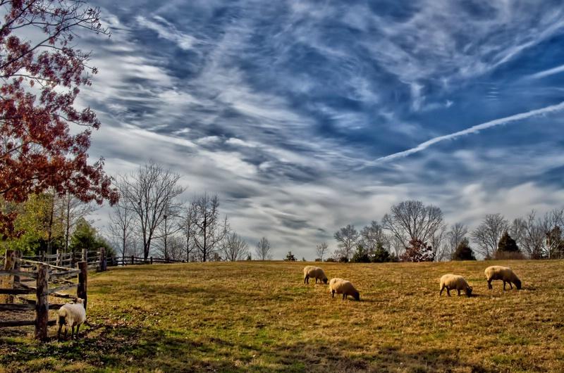 Mount Vernon Pasture