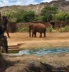 Elephante!