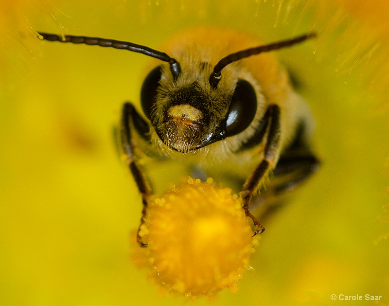 Have you hugged your Bee today??