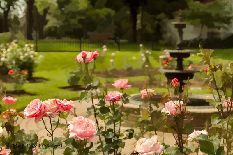 A Rose Garden - ID: 13964476 © Marilyn Cornwell