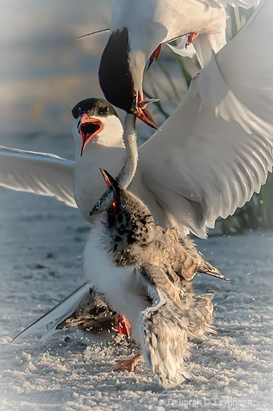 Tern Family Breakfast