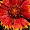 Open for Nectar