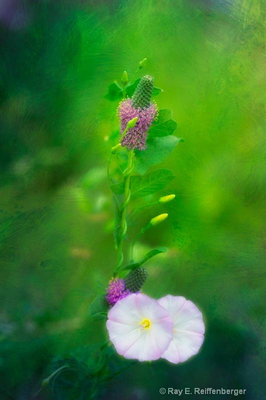 h0c9093 Flower13 - ID: 13983619 © Raymond E. Reiffenberger