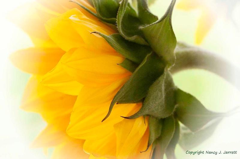 yellow image 0924