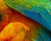 parrot detail 2